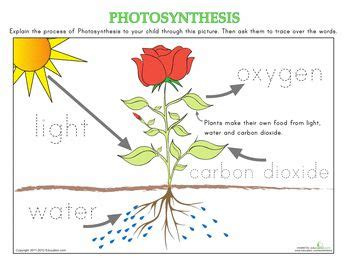 why are plants green worksheet 7 2 1000 images about how plants grow on gardens growing plants and cycles