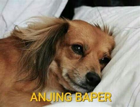 gambar anjing marah lucu ktawacom ayo ketawa