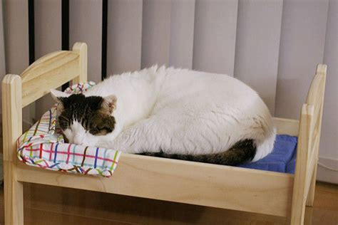 ikea cat bed japanese cat owners turn ikea doll beds into adorable cat