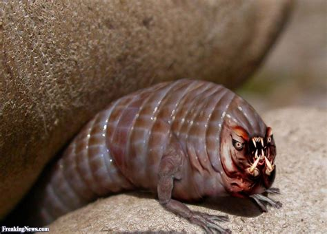 with worms worm pictures freaking news