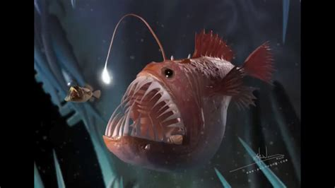 creature feature the deep sea anglerfish youtube