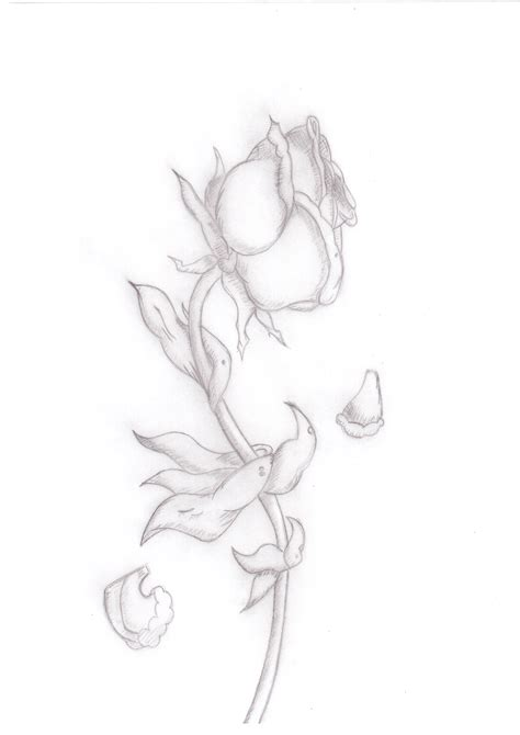 rose petal coloring page rose petals and roses coloring pages rose best free
