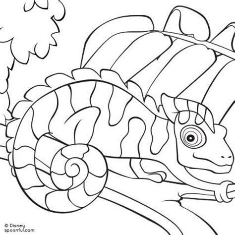 Chameleon Coloring Pages Chameleon Coloring Page Reptiles Lizards Amphibians by Chameleon Coloring Pages