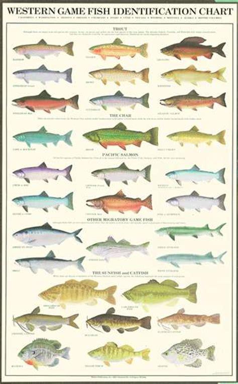 printable fish poster dynamic aqua supply ltd posters and prints