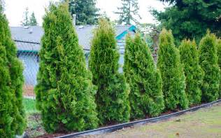 How Much To Put Up A Fence In Backyard Gardening Mariefriddle