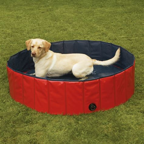 pools for dogs large pools for dogs breeds picture