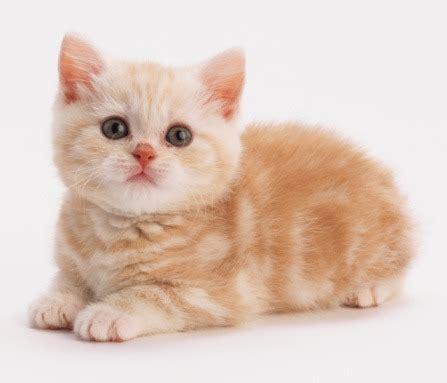 Harga Boneka Kucing Lucu by Gambar Kata Kata Bijak Related Keywords Gambar Kata Kata