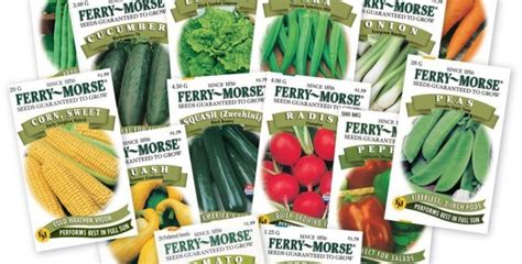 vegetable garden catalogs sgseeds seeds and gardening seed catalogs garden seeds