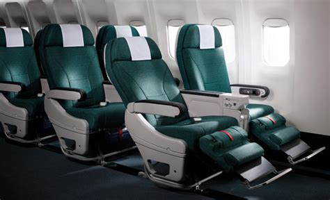 southern comfort kennels auckland cathay pacific premium economy cool hunting