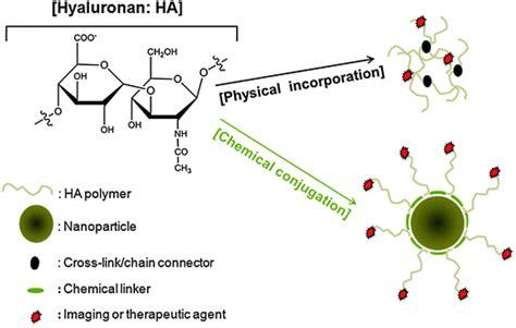 hyaluronan in cancer biology hyaluronan metabolism in remodeling extracellular matrix