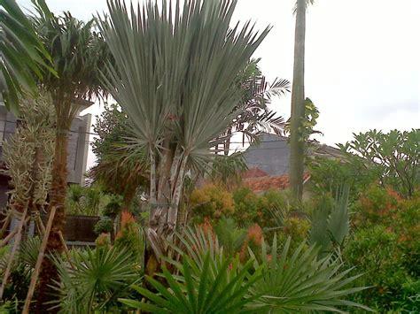tanaman hiaskolam minimalissaungpagar beton palm