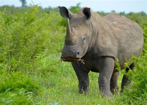 Welcome to the Wild World of Rhino Conservation - Our World