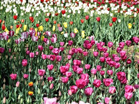 Bush Garden Ta by Free Stock Photos Rgbstock Free Stock Images