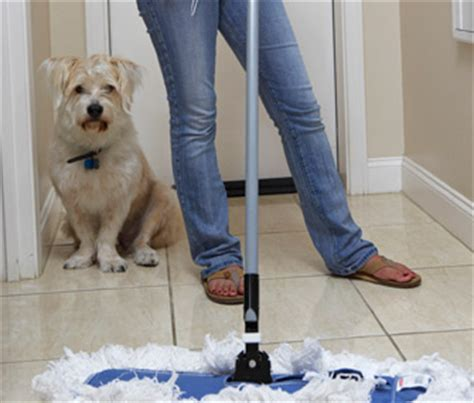 my dog poops in the house at night it is easier to just clean it up another look at potty training