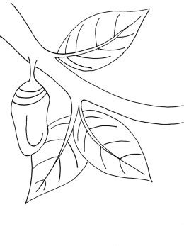 butterfly chrysalis coloring pages monarch butterflies and what you can do to save them