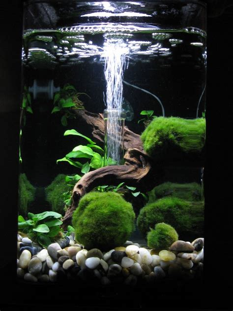 aquarium aquascaping 932 best aquarium fish tank aquascape aquascaping