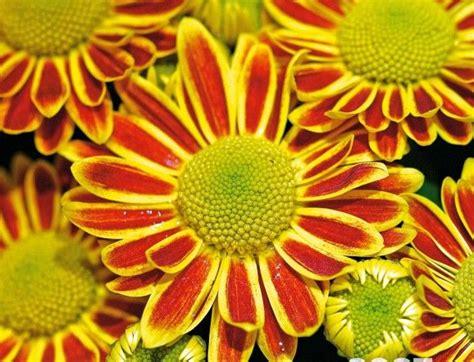 sergio endrigo ci vuole un fiore ci vuole un fiore bimbi sani e belli