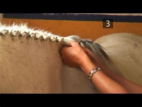 cute hairstyles for horses how to braid a horse s mane youtube