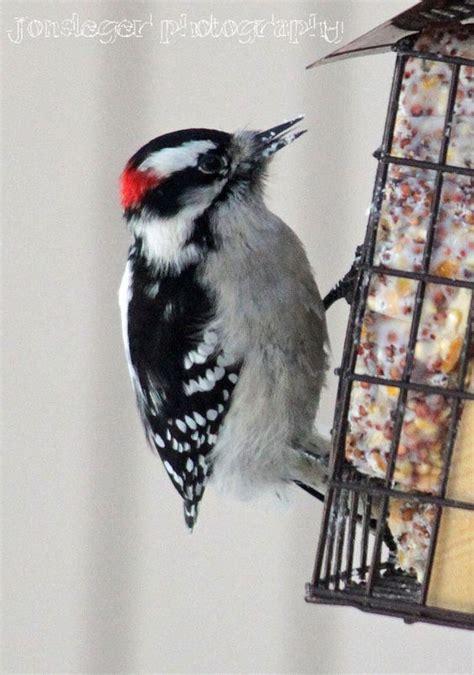 northern illinois birder year round tree clinging birds