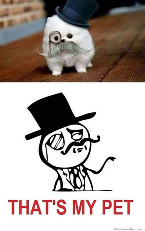 Pet Meme - that s my pet weknowmemes