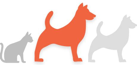 find your pet using the recovery network homeagain pet