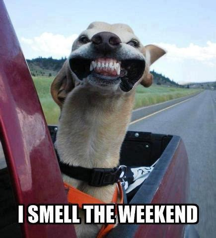 Weekend Dog Meme - long weekend memes image memes at relatably com