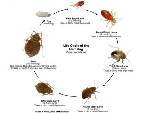 do bed bugs fly bed bugs pestop pest control supplies and franchise