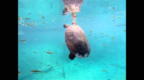 dive blue snokle dive at blue grotto fl