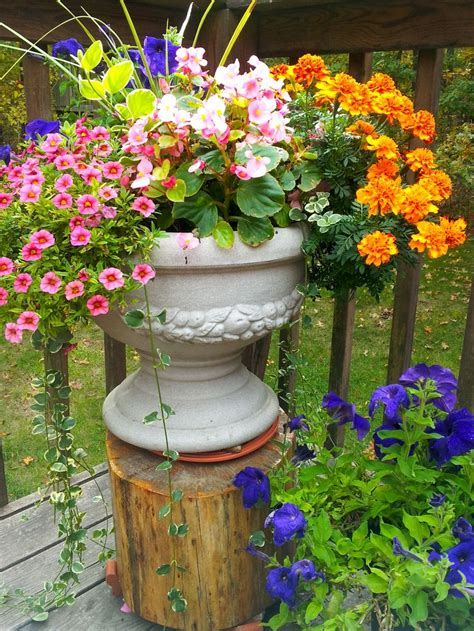 patio flower pot summer