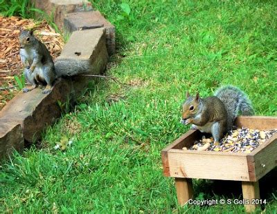 yard and garden secrets keep squirrels out of bird
