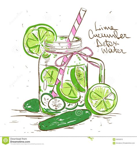 Detox Clipart by Sketch Illustration Of Lime Cucumber Detox Water Stock