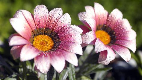 imagenes flores bellas gratis fondo pantalla bellas flores