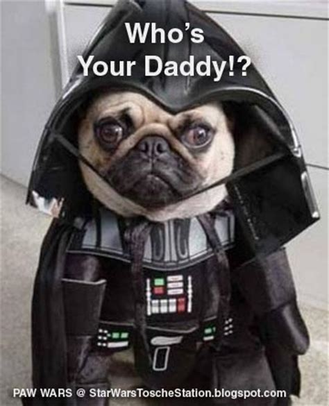 pug darth vader costume wars pug animals animal