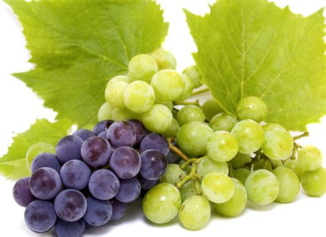 imagenes las uvas las uvas 161 placer gastron 243 mico de oto 241 o