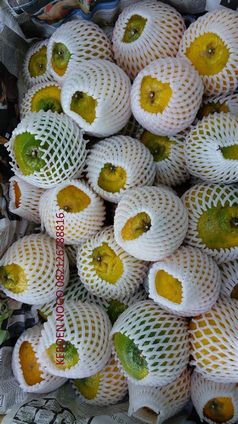 Bibit Jeruk Dekopon jeruk dekopon supermarket 187 buah naga hybrid
