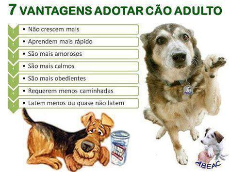E Para Adocao From The Adoptable Pets Photo Pool by O Que Saber Antes De Adotar Um C 227 O Animais Cultura Mix