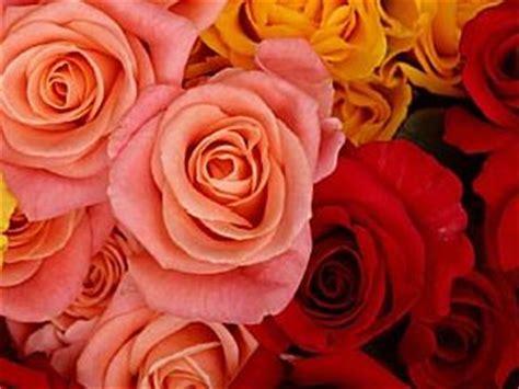 free beautiful flowers screen savers