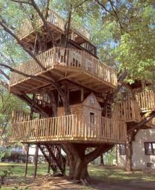 livign tree house design