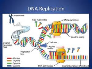 non template dna dna non template strand bestsellerbookdb