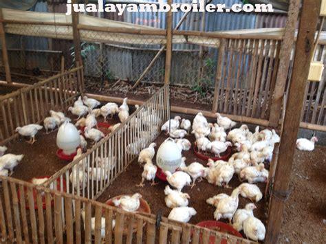 Jual Bibit Ayam Broiler Di Bekasi jual ayam broiler di gunung putri bogorjual ayam broiler