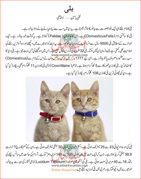 my pet connection inspirational â tailsâ of adoption books cats information in urdu cats kittens