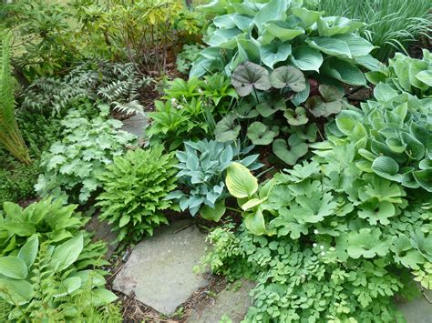 Hosta Garden Layout Hostas Flowers Pictures Beautiful Hosta Garden Layout