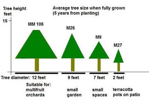 fruit tree spacing chart growing fruit trees hints and tips realenglishfruit
