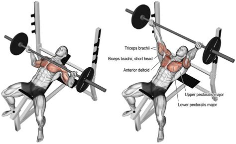powerlifting bench press grip what everyone ought to know about the reverse grip bench press fitprince
