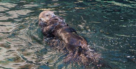 vancouver aquarium 50 new year daily hive