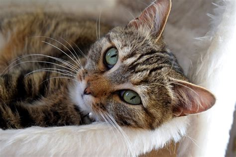 canine and feline geriatric oncology honoring the human animal bond books kidney disease in cats canna pet