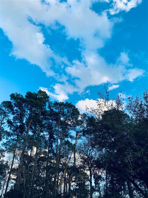 wallpaper warna biru langit paimin gambar