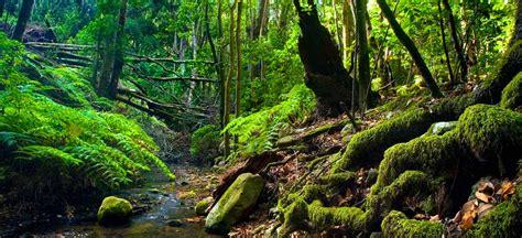 originelle wandlen nationalpark garajonay la gomera naturr 228 ume