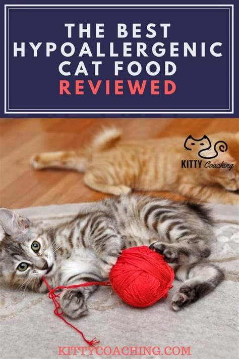 best hypoallergenic hypoallergenic cat food recipes food