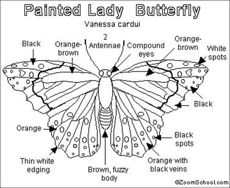 butterfly coloring page education com 90 best images about 2nd grade science life cycles on